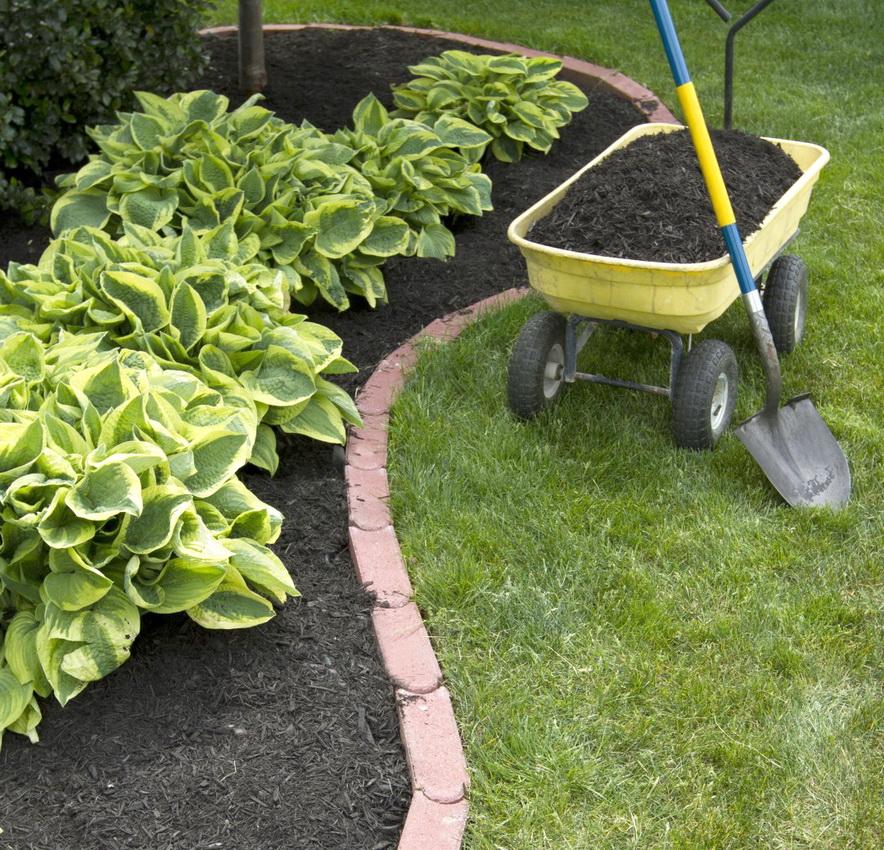 Giardinaggio potatura impresa di pulizie e servizi for Entreprise espace vert 78